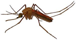 Iowa Records First West Nile Virus Case of 2015
