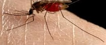 IDPH Announces First Human West Nile Virus Case of Season (7/20/17)