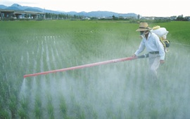 Man Spraying Field
